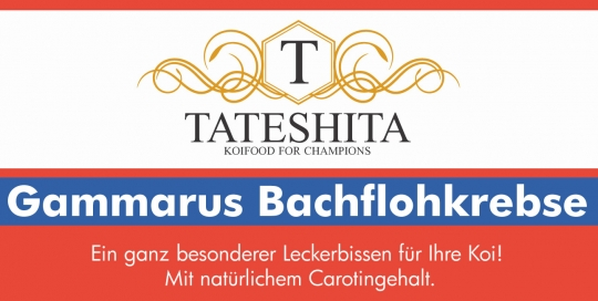 tateshita-gammarus